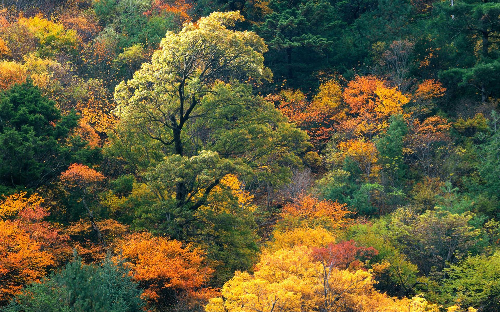 大自然风景桌面壁纸