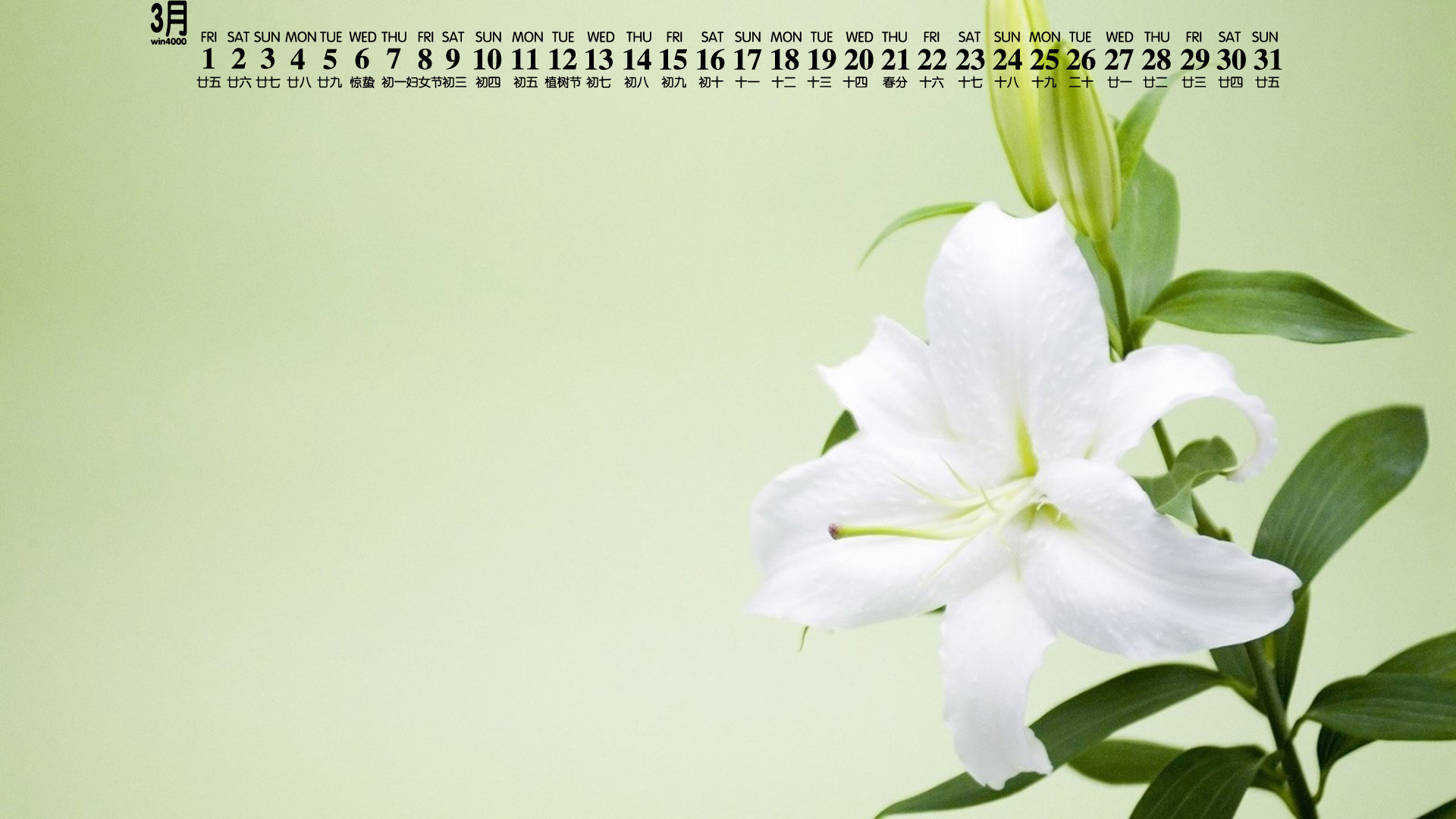 2019年3月植物花卉唯美日历桌面壁纸下载
