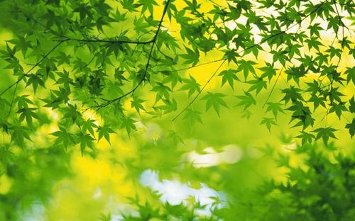 大型绿叶观赏植物图片大全