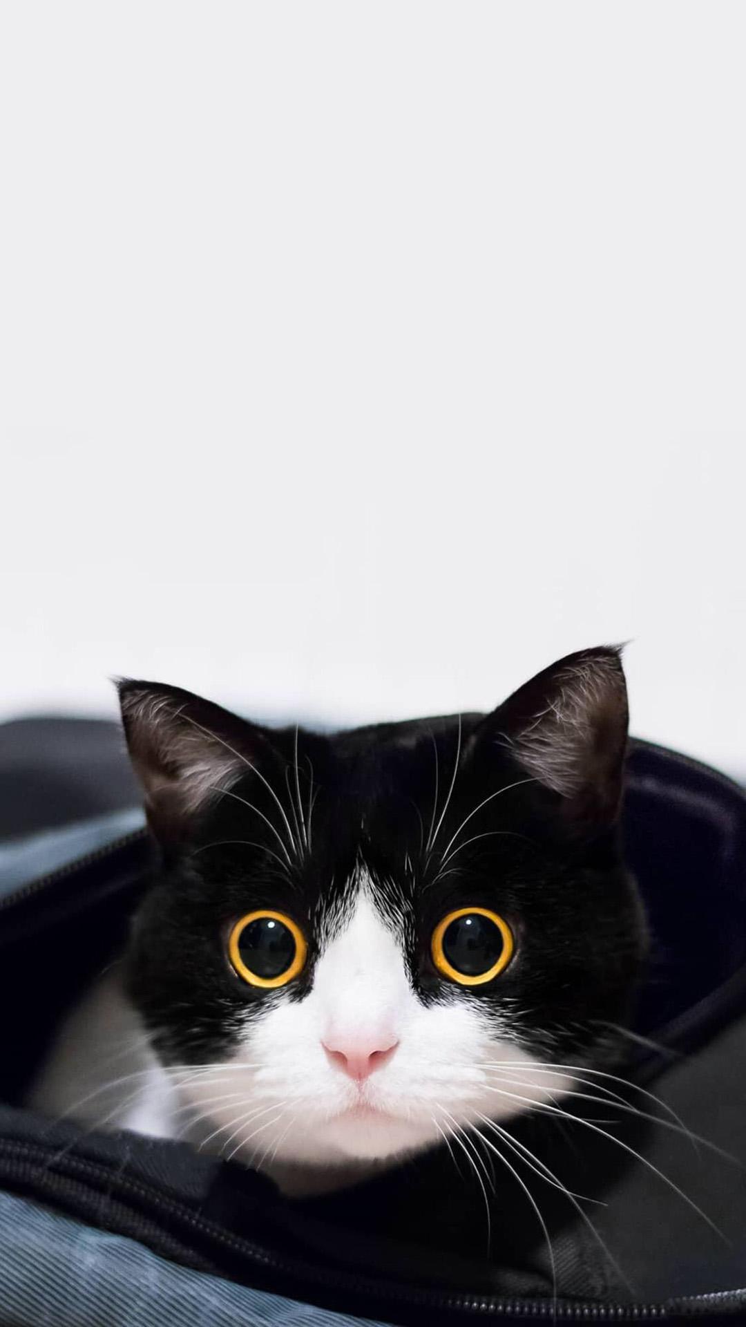 毛茸茸的萌宠小黑猫高清安卓手机壁纸