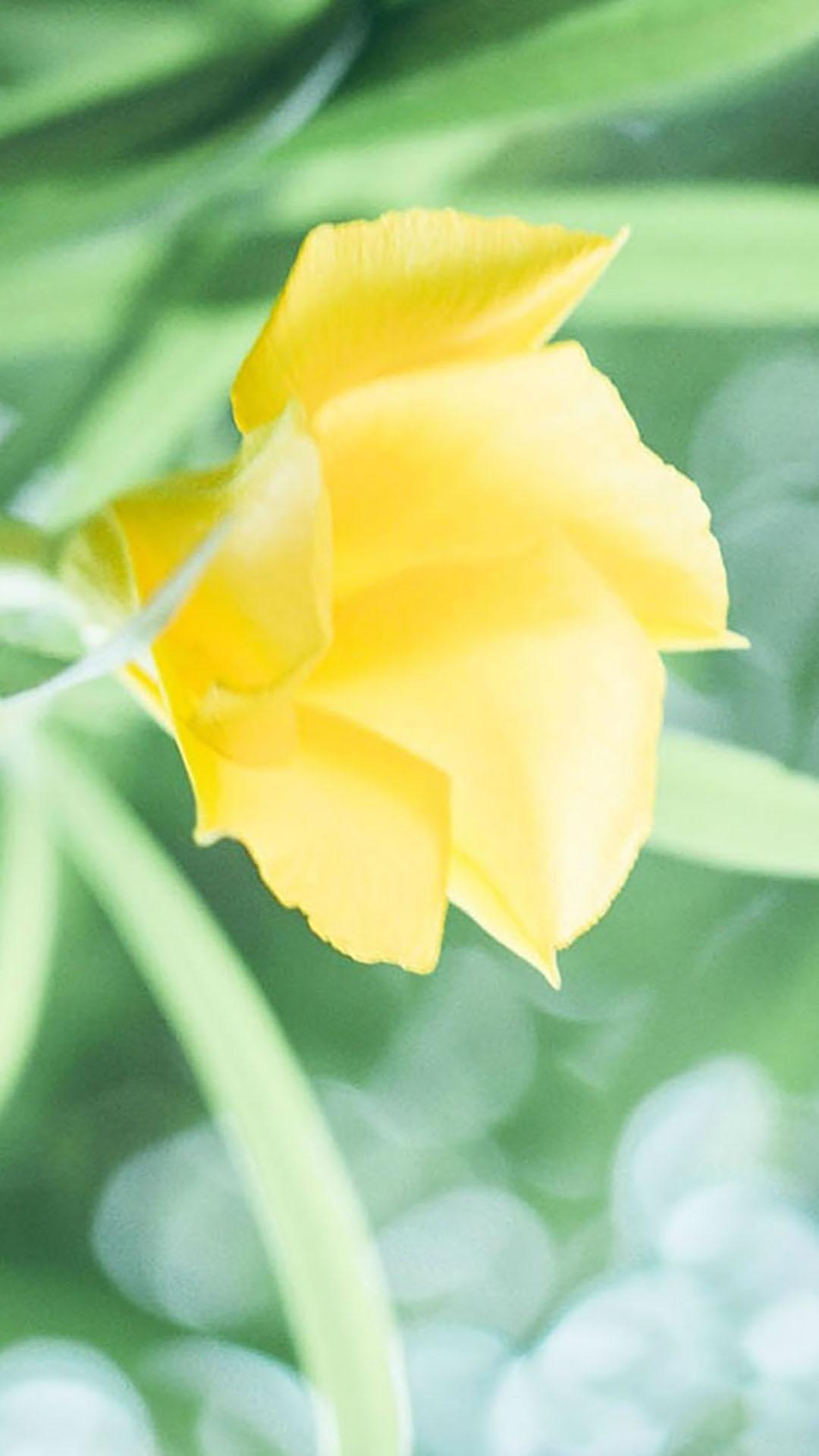 绿色系唯美小清新植物摄影高清无水印苹果手机锁屏壁纸
