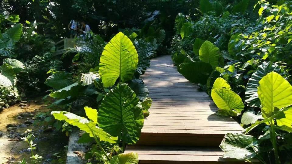 绿叶植物大自然风景静物摄影图片大全