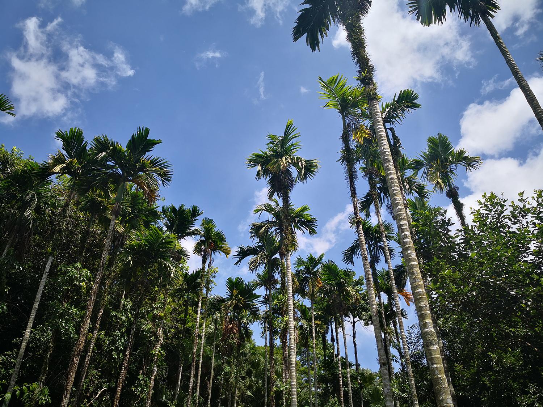 蓝天白云椰子树下大自然风景图片大全