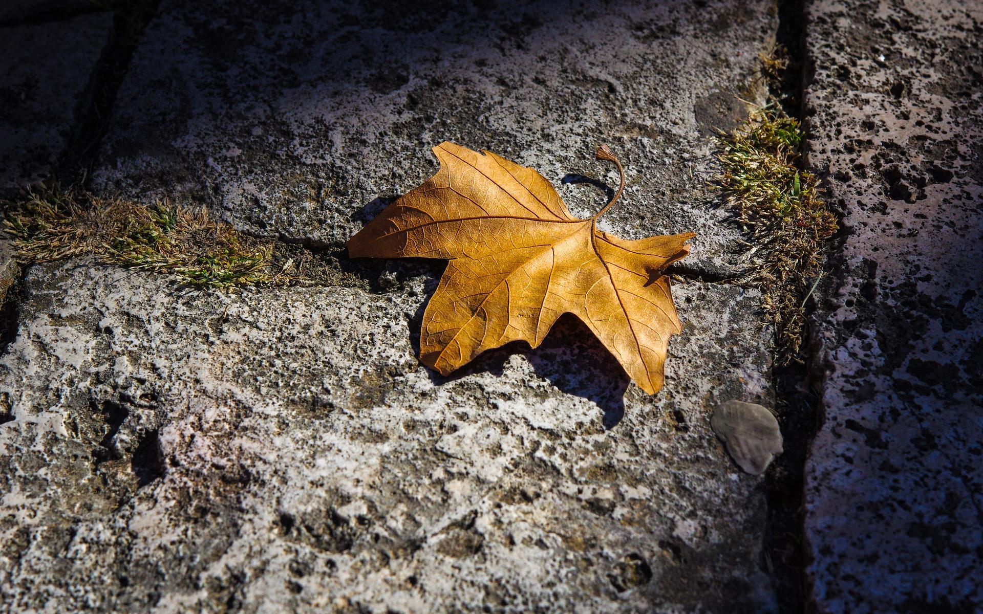 秋天的树叶风景图片护眼桌面壁纸高清