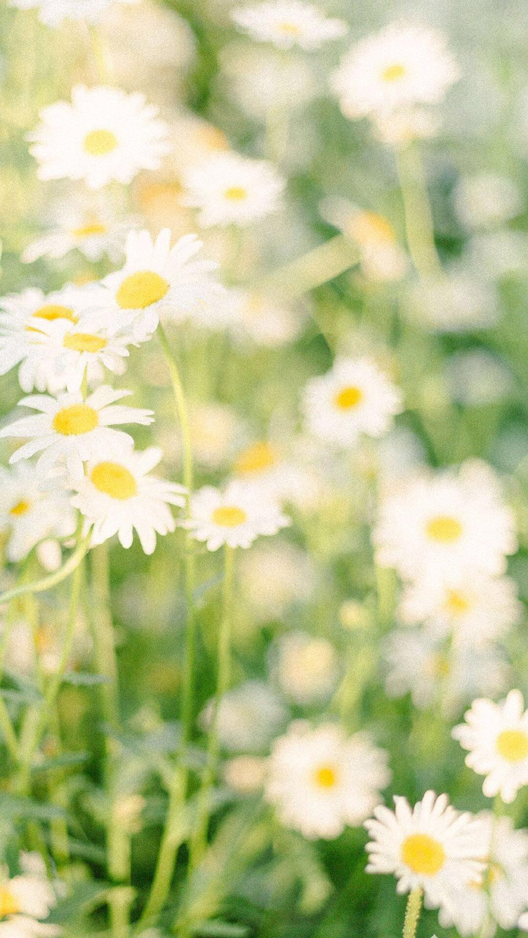 小清新护眼植物花卉摄影唯美日系苹果手机高清壁纸图片