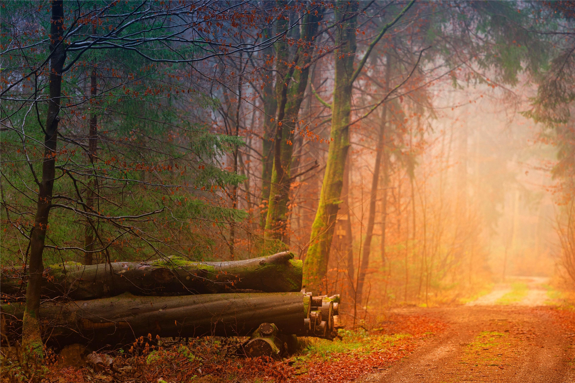 金色枫叶唯美风景保护眼睛的桌面壁纸