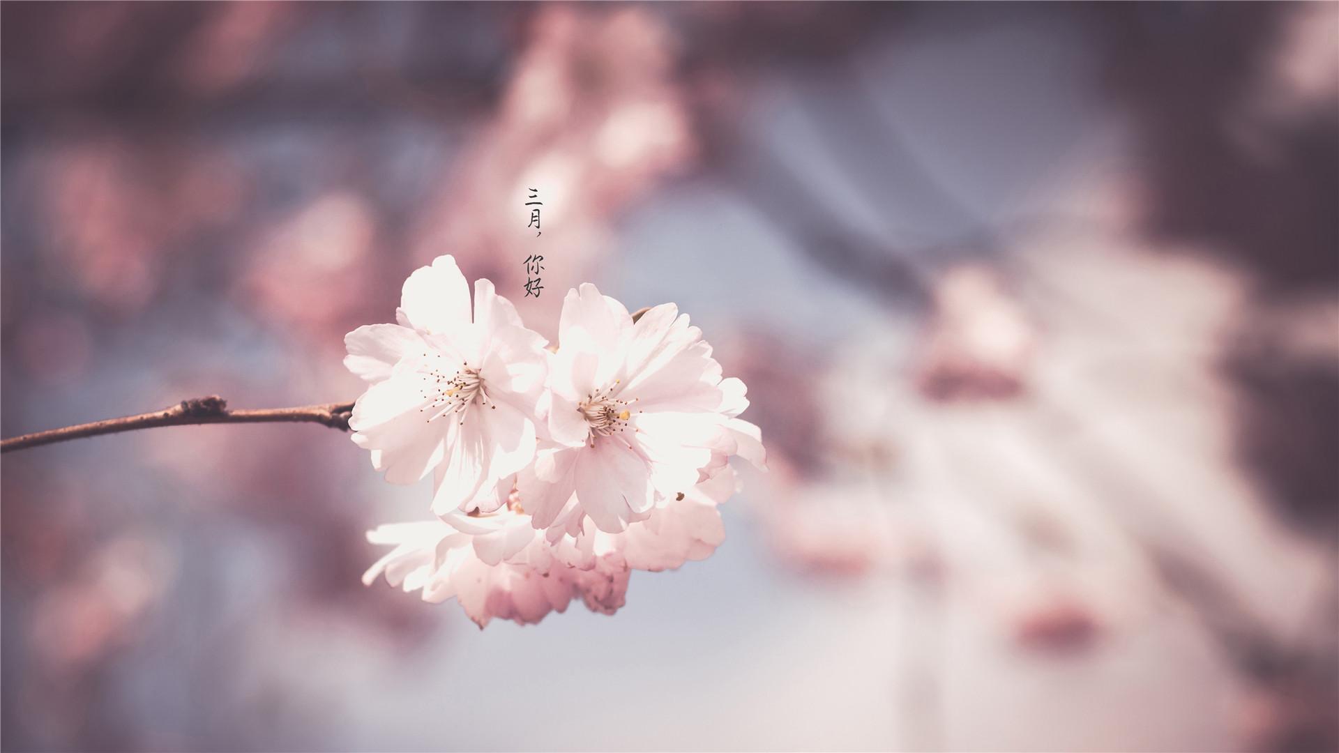 花卉种类植物图片清爽桌面壁纸自动换
