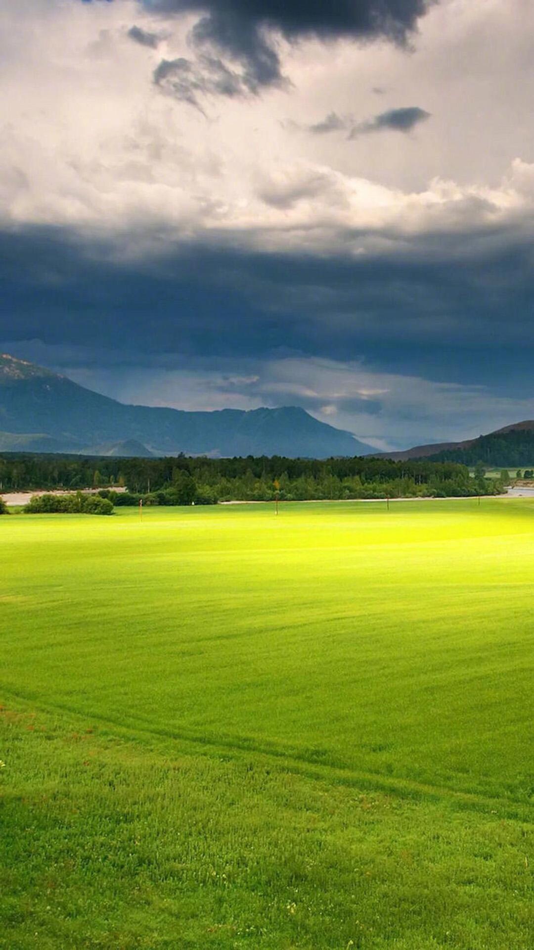 清新护眼绿色植物大自然美丽风景图片高清手机壁纸图片