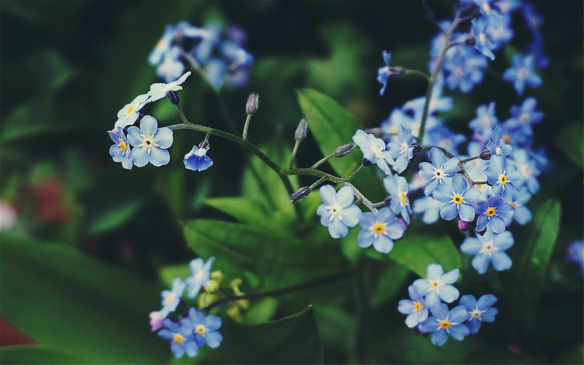 大自然户外鲜花绿植高清摄影唯美小清新电脑花卉壁纸图片