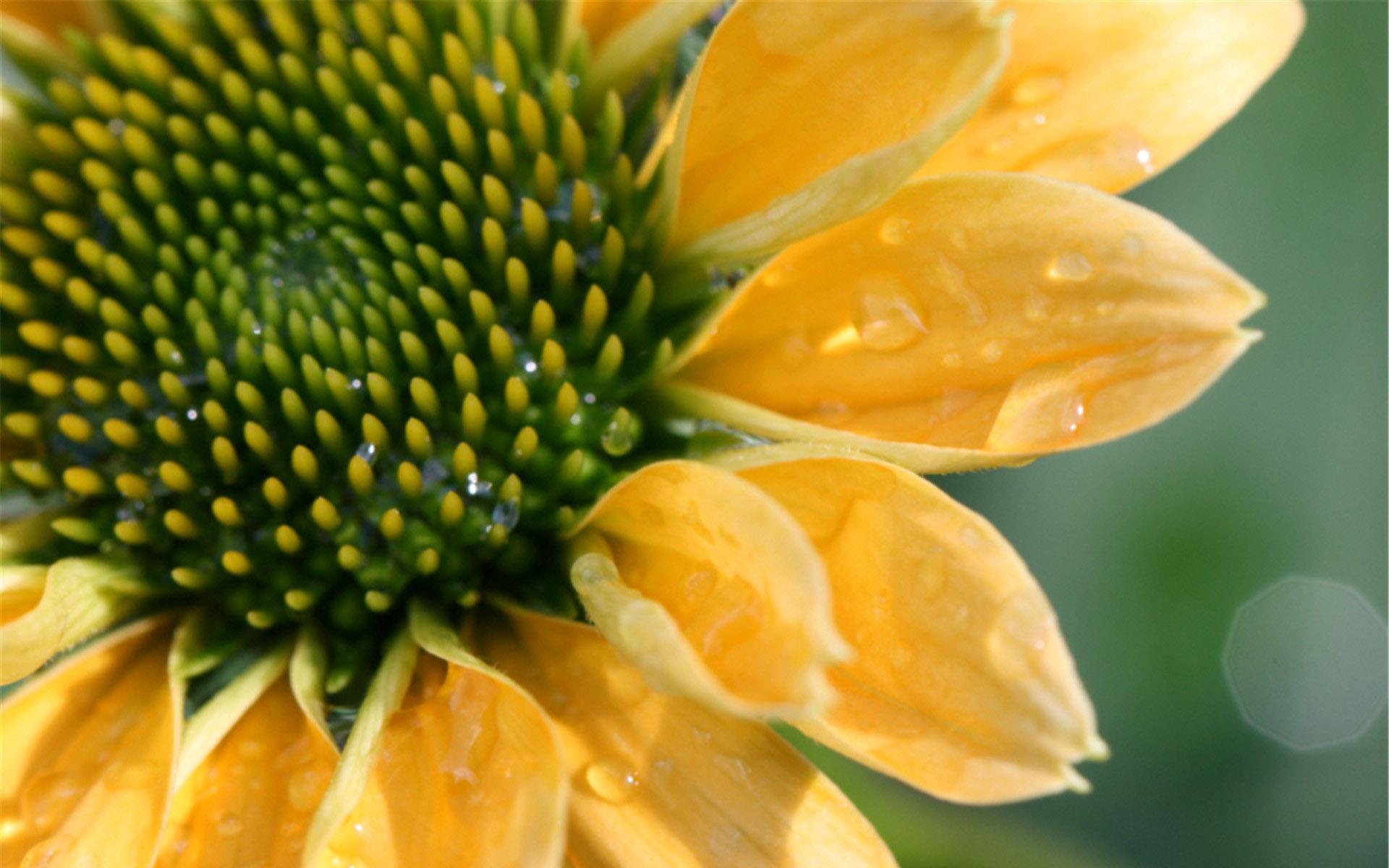 向日葵的花语和寓意好看的电脑桌面壁纸