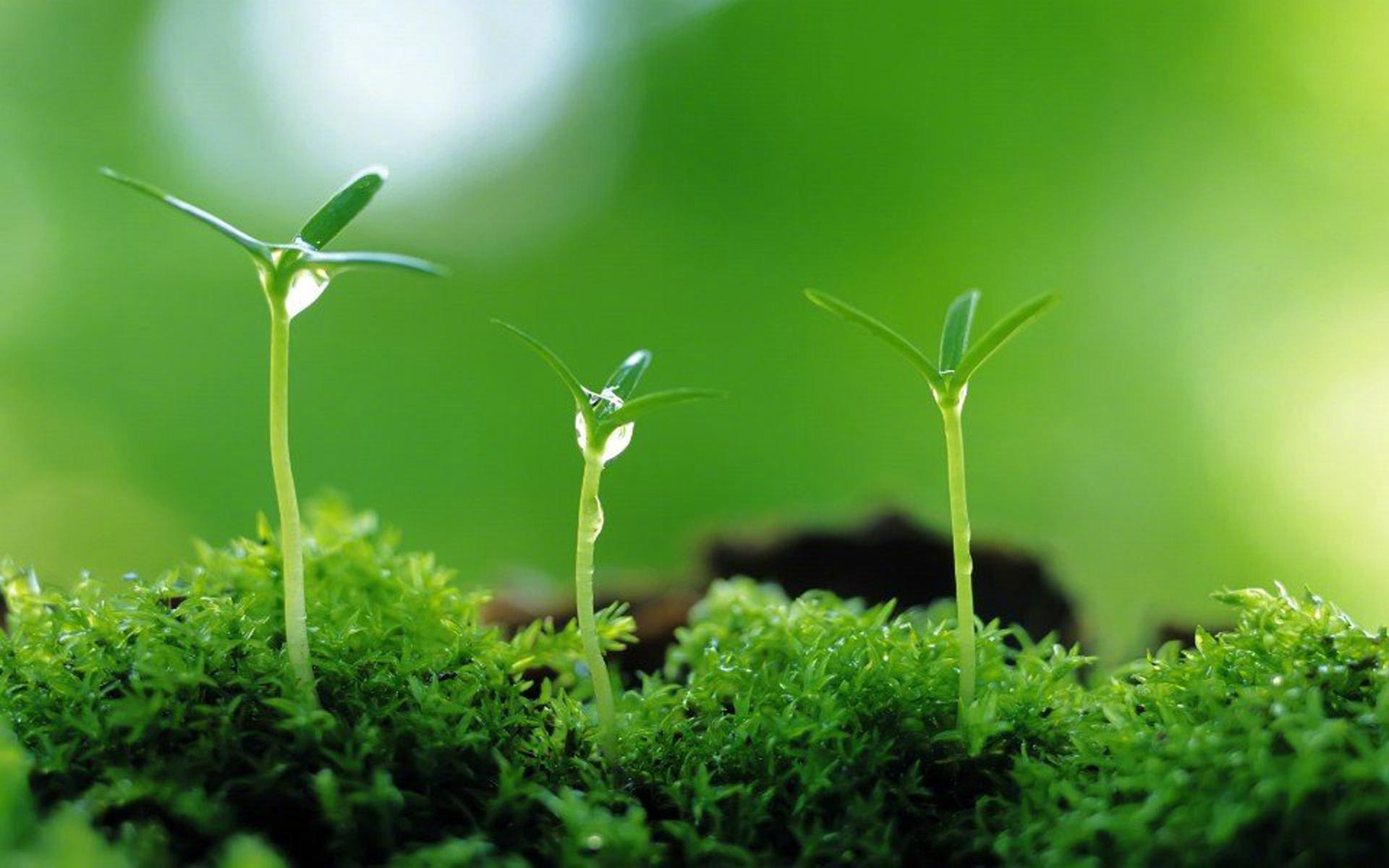 绿色嫩芽清新生命图片桌面护眼壁纸