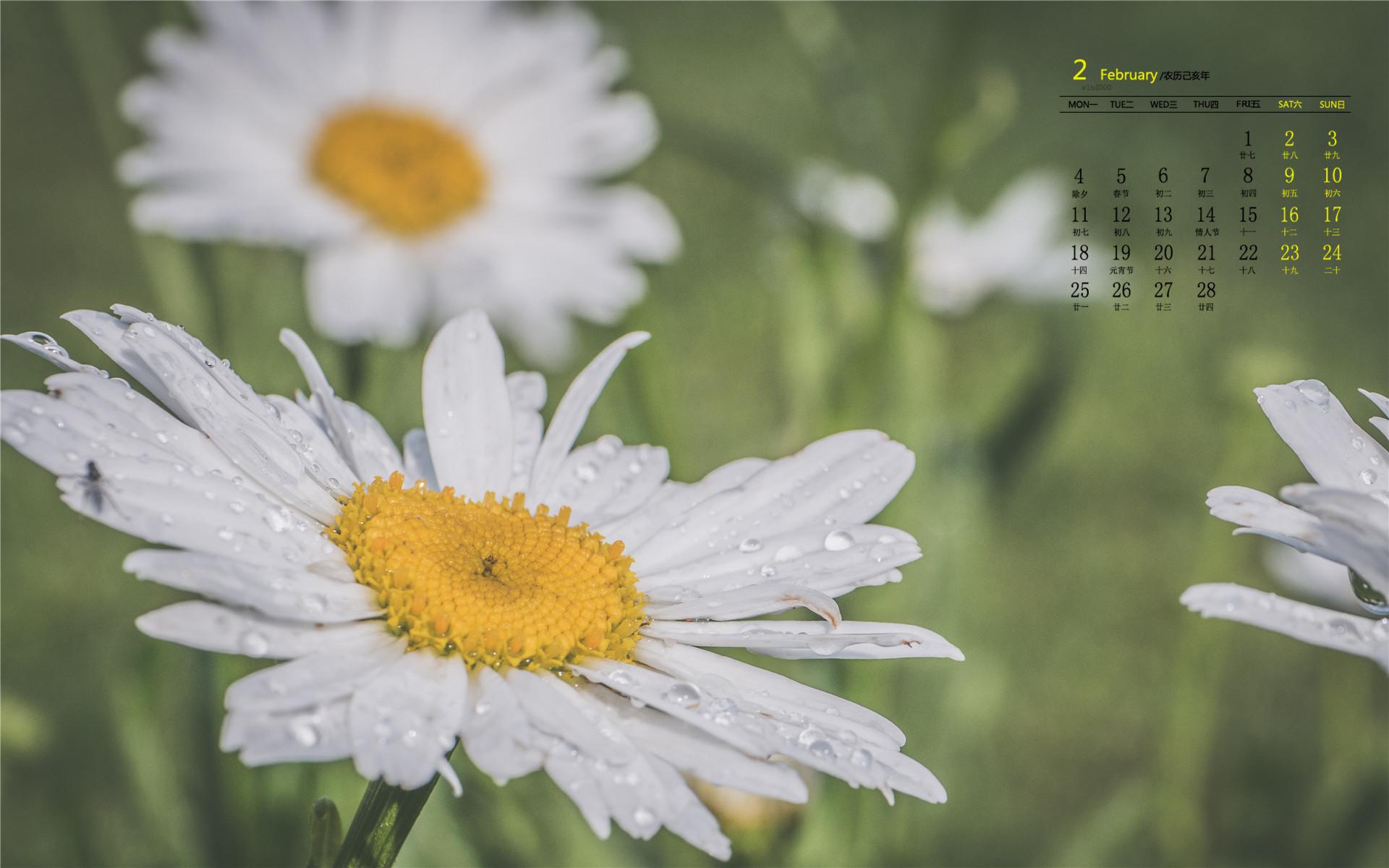 纯净的雏菊花朵高清桌面日历壁纸
