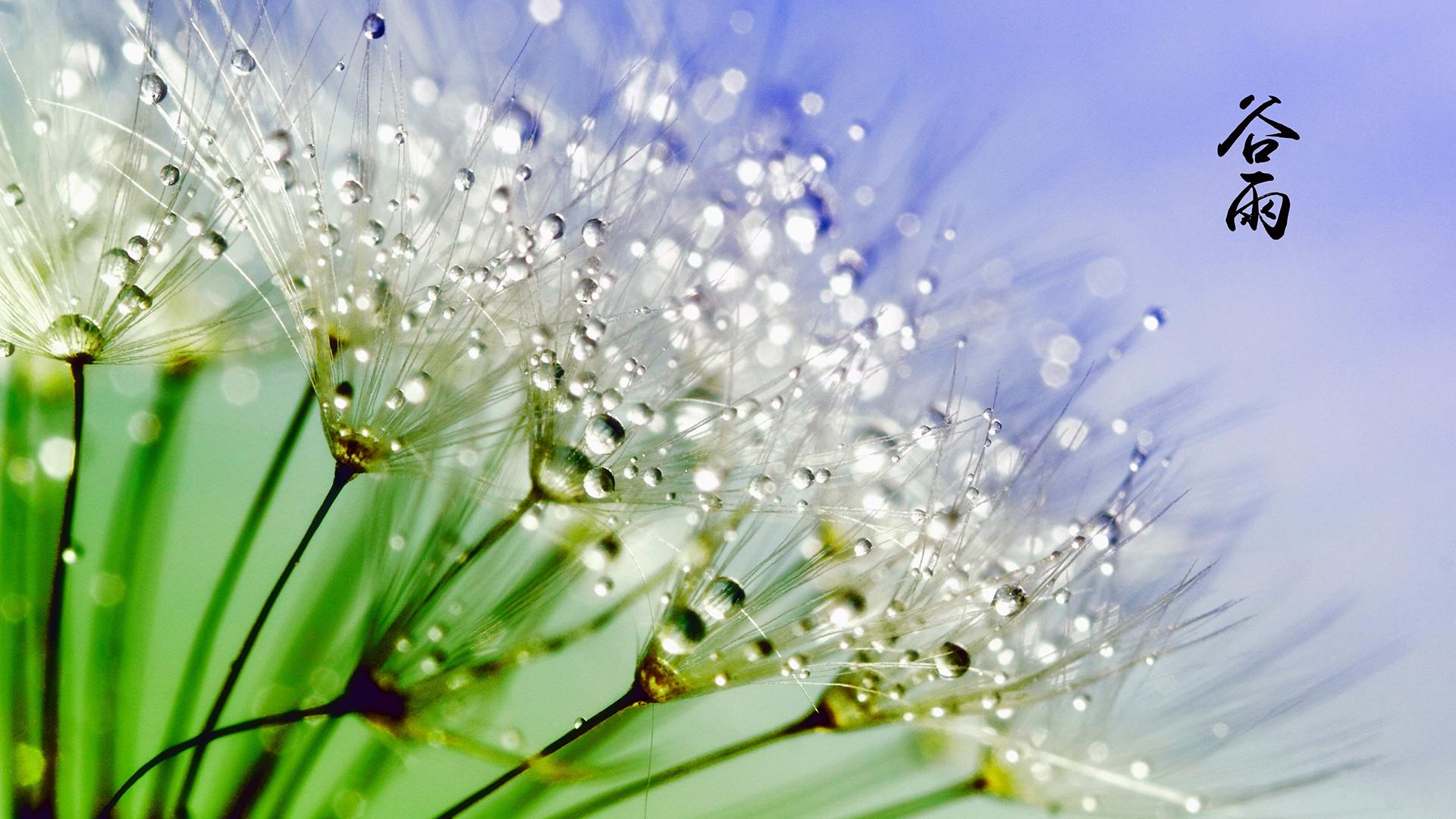 谷雨绿色小草植物护眼电脑高清壁纸图片