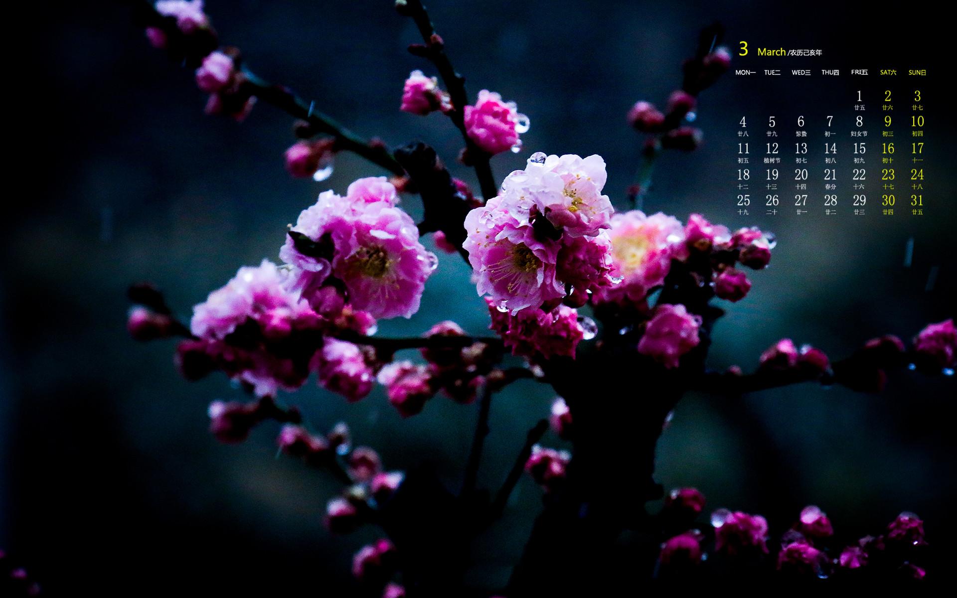 千姿百态的梅花唯美高清日历壁纸