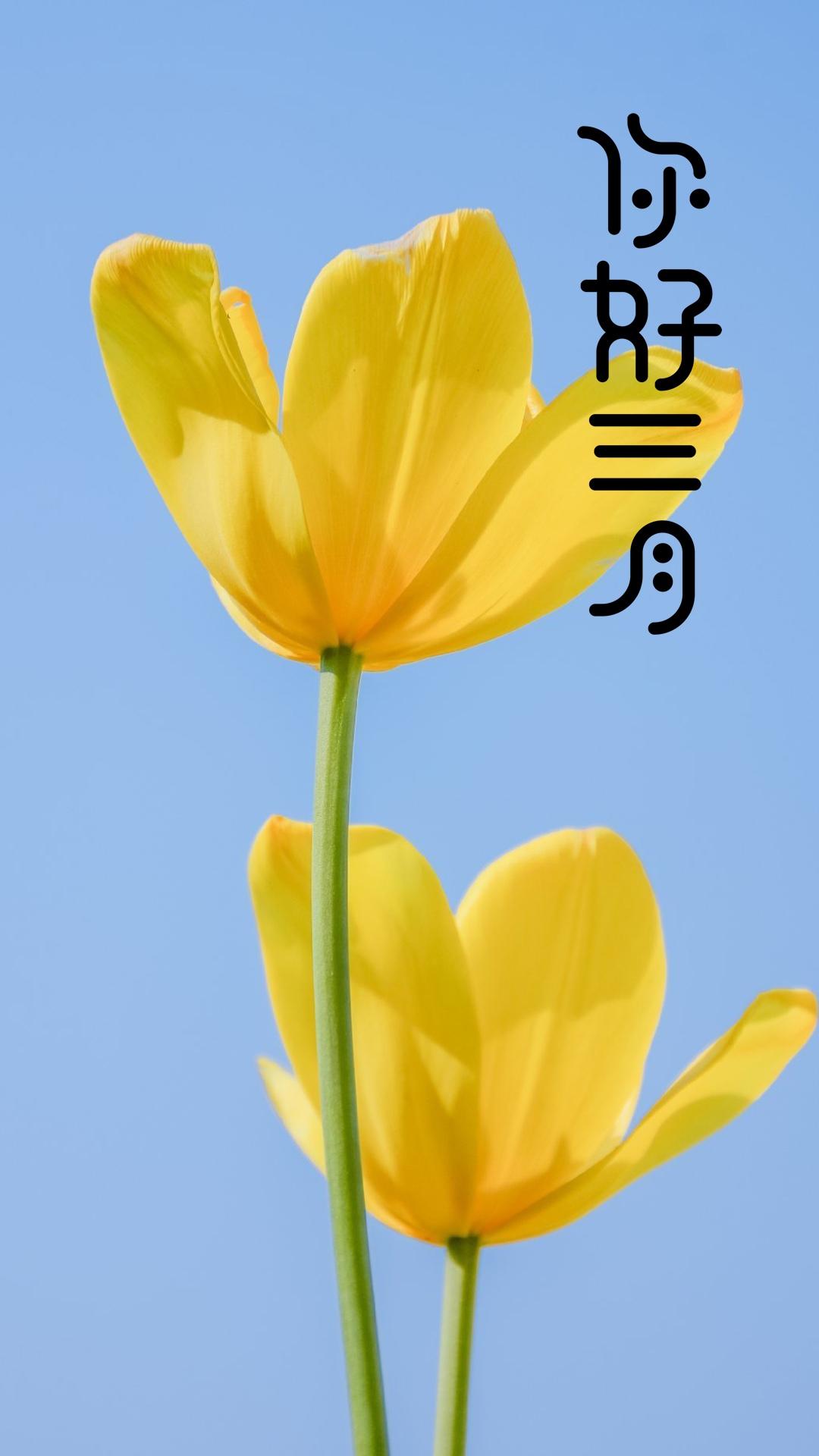 三月你好清新花朵植物手机壁纸图片