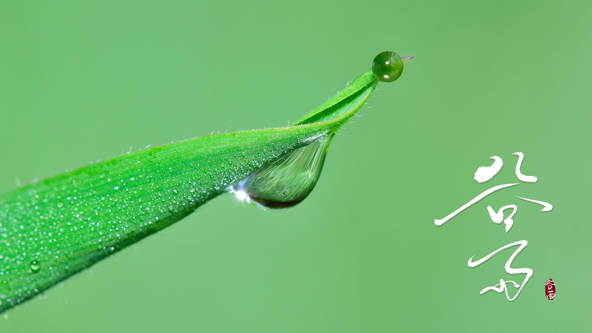 谷雨清新养眼绿色壁纸