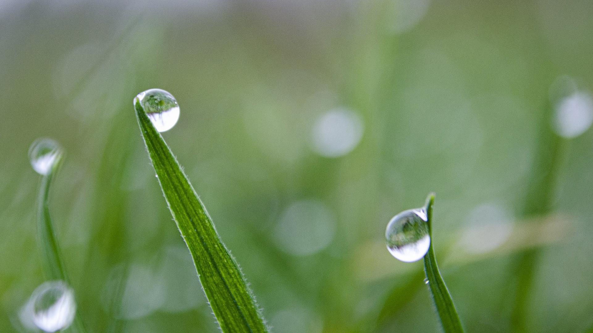 清新养眼的早晨绿色摄影