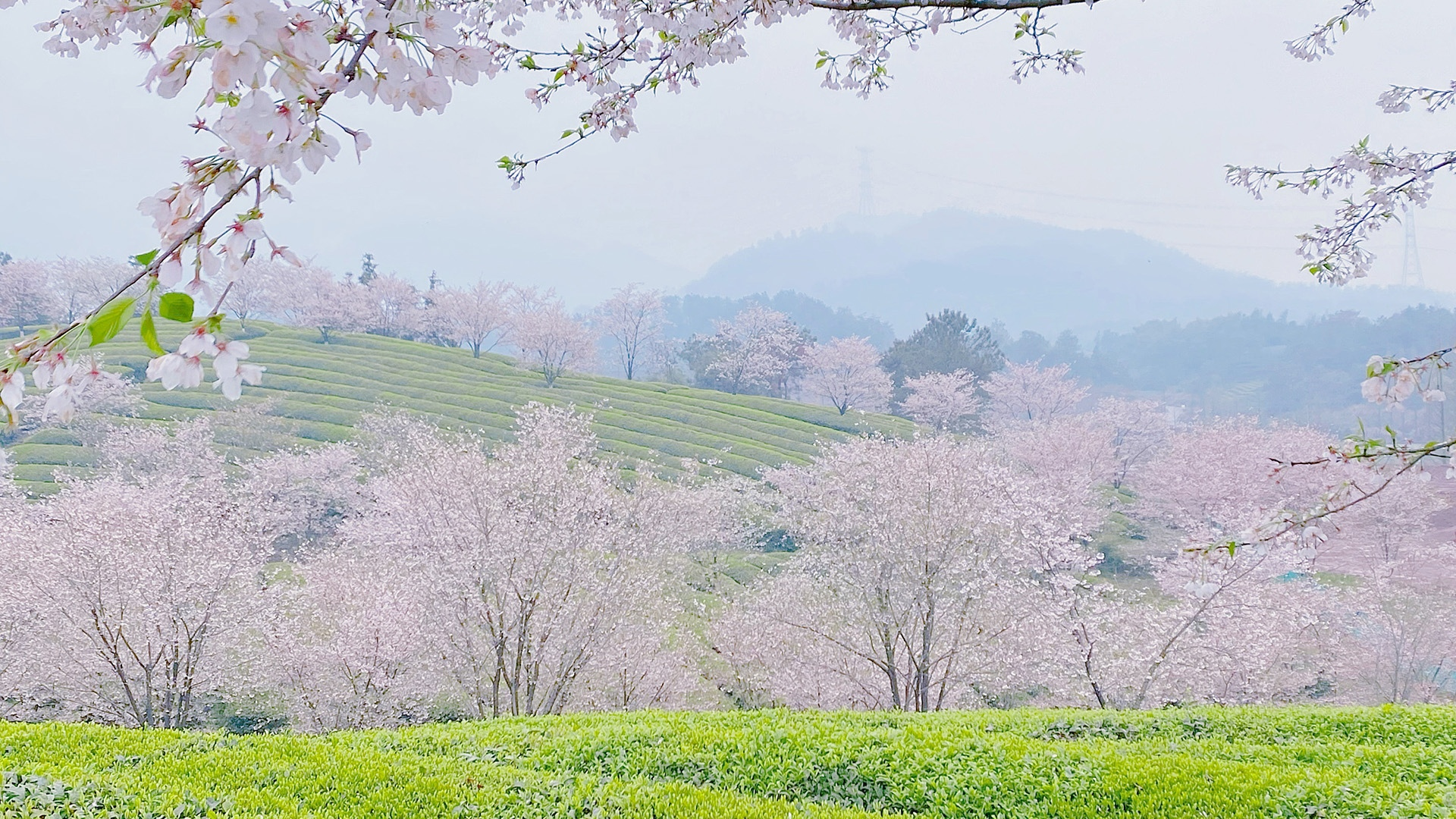 春季田园唯美桌面壁纸
