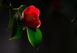 阳光下通透的红色唯美花卉图片高清桌面壁纸